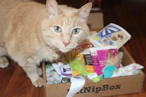 KitNipBox August 2014 Review
