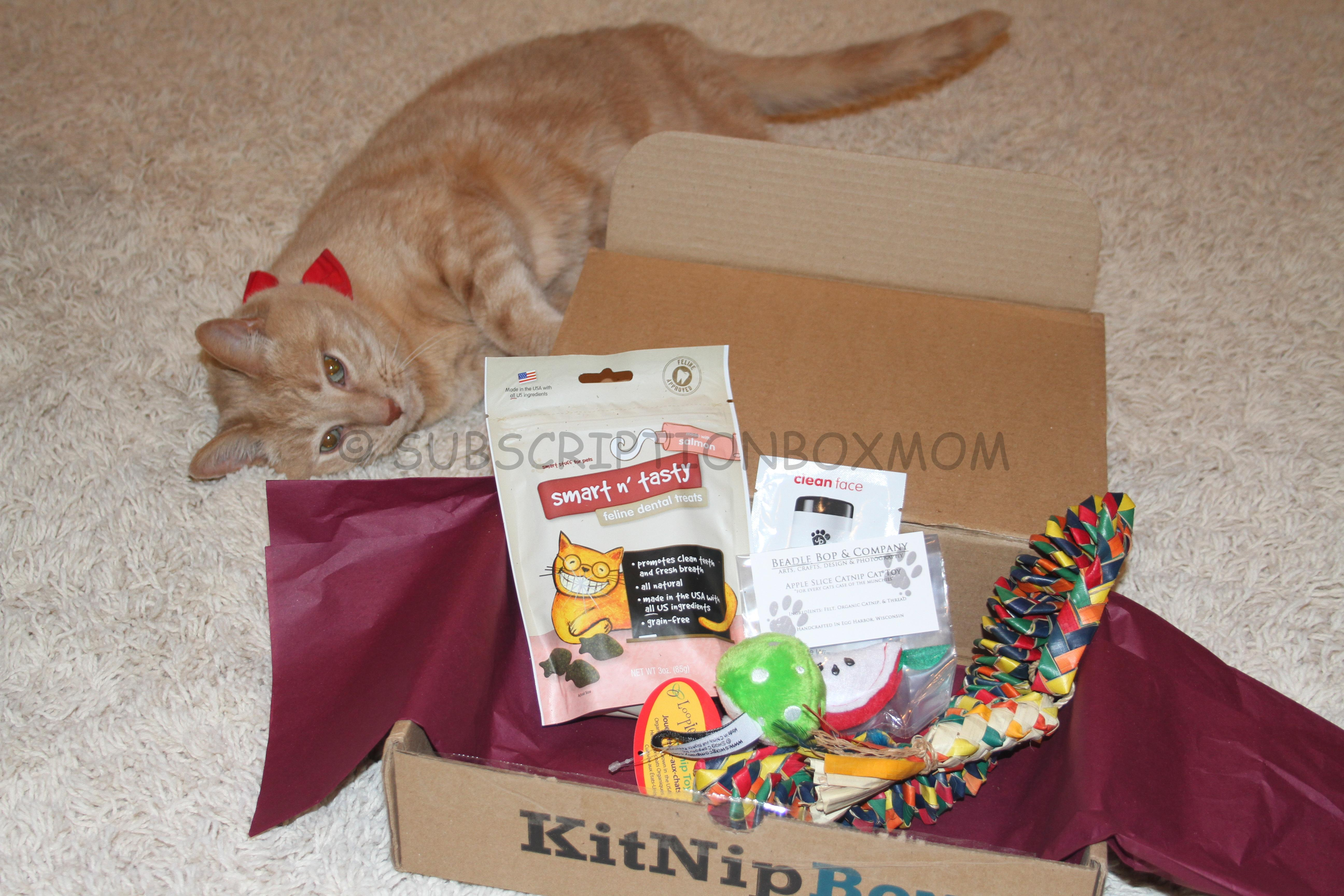 Kitnipbox November 2014 Review Save 15 Cat