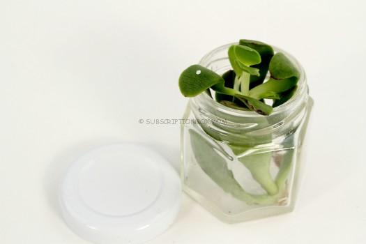 Succulent Clipping and Hexagonal Jar