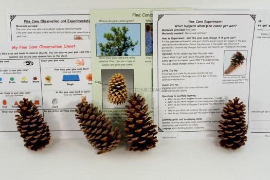 Pine Cone Experiment
