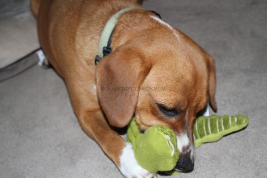 Grriggles Unstuffies Big Squeak Toys