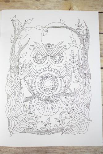 Owls by Sabine Van Ee