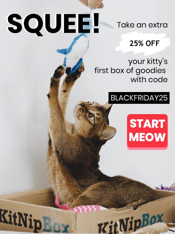 KitNipBox Black Friday 2019 Coupon Code